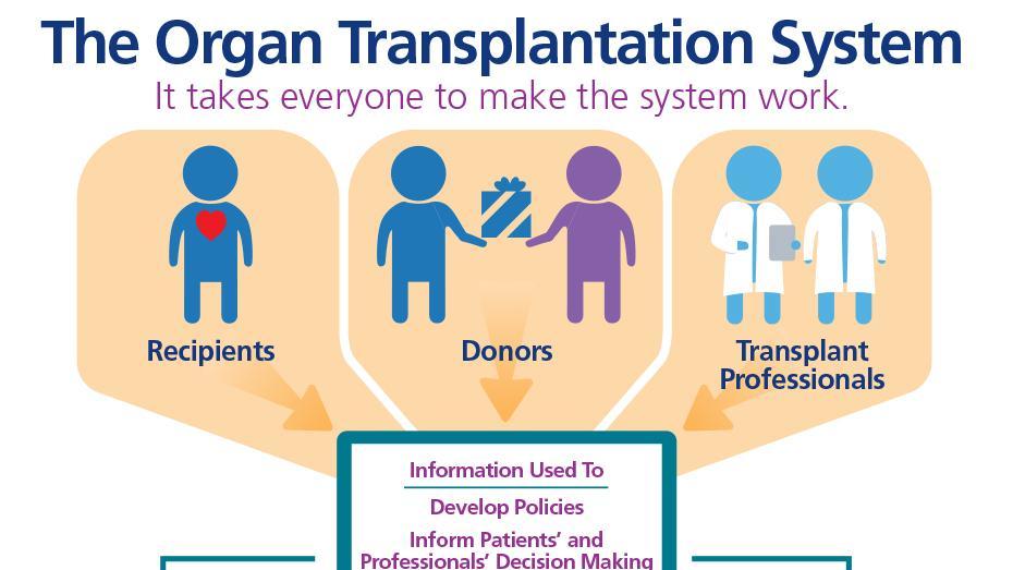 El sistema de trasplante de órganos